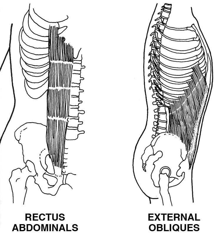 Abdominals Monthly Misery And More Bonnie Prudden Myotherapy