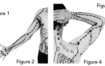 The Shoulder and Wrist Connection