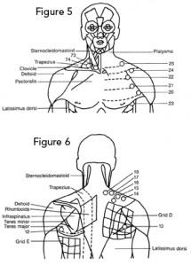 Torso and upper back