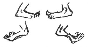 oldster feet exercise drawings - by Bonnie Prudden