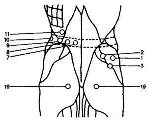 Lower Back Diagram