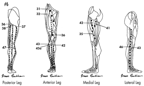 Trigger points in the legs