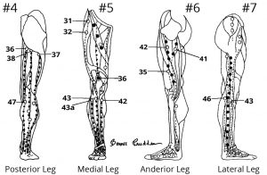 Views of Posterior, Medial, Anterior and Lateral Leg